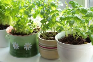 potted-herbs-on-a-windowsill04101224